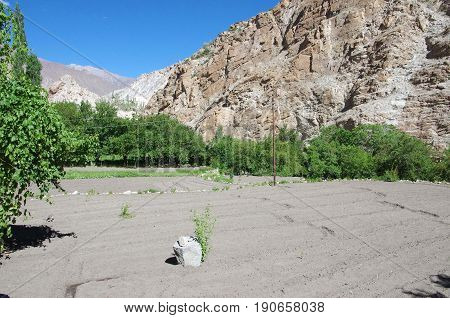 Agriculture in the Himalayan mountains in Ladakh, India