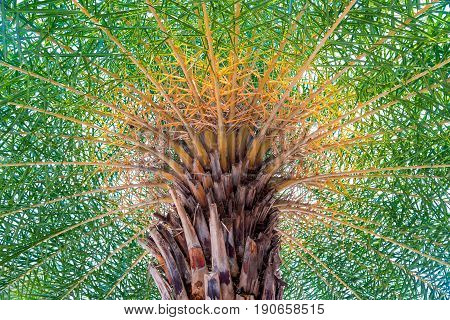 Palm top close up bottom up view