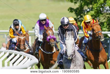 STOCKHOLM SWEDEN - JUNE 06 2017: Coloful jockeys on gallop arabian race horses storming ahead in a curve at Nationaldags Galoppen at Gardet. June 6 2017 in Stockholm Sweden