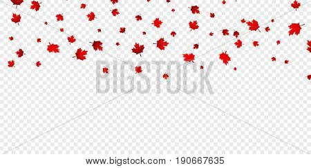 Canadian maple leaves background. Falling red leaves for Canada Day 1st July.