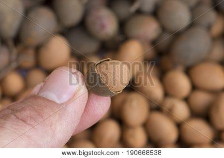 Closeup shallow DOF of finger and thumb holding tiny Dialium guianense guapaque fruit