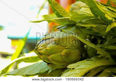 Fresh green artichokes flower heads with leaves ready to cook seasonal food Sicily Italy
