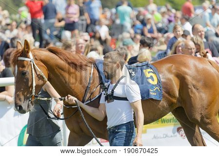 STOCKHOLM SWEDEN - JUNE 06 2017: Musse Musselvall leading a gallop arabian race horse in the vault at Nationaldags Galoppen at Gardet. June 6 2017 in Stockholm Sweden