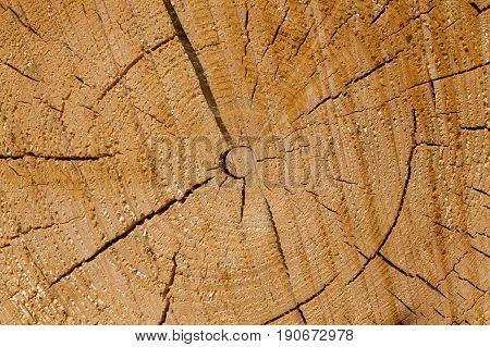 Freshly Cut Tree Logs
