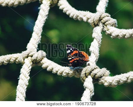 Red admiral butterfly sitting on a rope net on a summer day