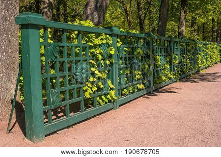 Petergof, Russia - June 5, 2017: Wooden lattice fence of the Great Greenhouse of the lower park. The greenhouse is to the right of the Sea Canal.