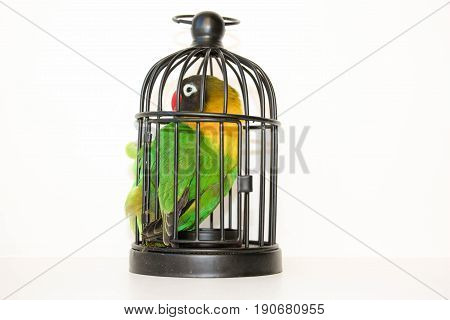 Caught. Parrot In A Cage On A White