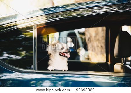 Dog So Cute Sitting Inside A Car Wait For Travel