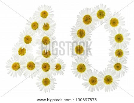 Arabic Numeral 40, Forty, From White Flowers Of Chamomile, Isolated On White Background