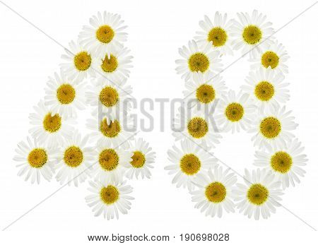 Arabic Numeral 48, Forty Eight, From White Flowers Of Chamomile, Isolated On White Background