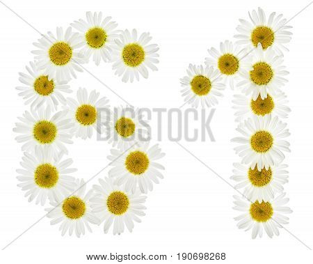Arabic Numeral 61, Sixty One, From White Flowers Of Chamomile, Isolated On White Background