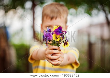 Child hands holding a bouquet pansies flower . Focus for flowers.