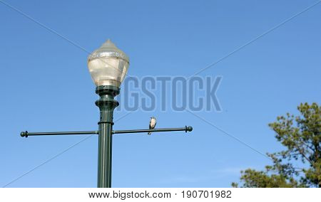 One street lamp with a single light at the top of the post and a small bird perched on the metal arms crossing through it.