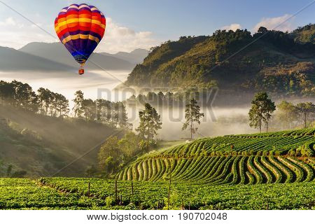 Colorful hot air balloons flying over misty morning sunrise in strawberry garden View of Morning Mist at doi angkhang Mountain Chiang Mai Thailand
