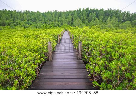 Wooden bridge in mangrove field, boardwalk in Tung Prong Thong, Rayong, Thailand