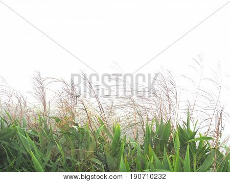 Windy wild grass flowers with green leaves in the field