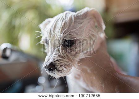 Dog grooming, washing or treatment