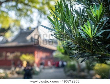Shanghai, China - Nov 4, 2016: In Yu Yuan (Yu Garden) - Sunlit leaves in foreground while background blur (bokeh) consists of a traditional Chinese building in classic architectural styling.