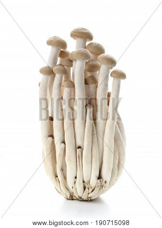 Brown beech mushrooms Shimeji mushroom Edible mushroom isolated on white background