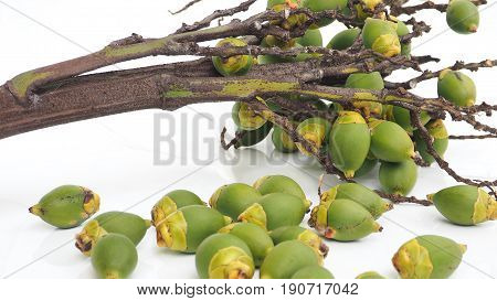 Agriculture industry bouquet of Palm foxtail fruit zoom in Macro photo focus select at background Isolate on white background.
