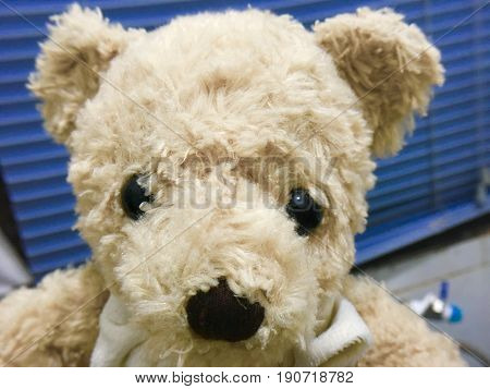 Close Up of Cute Brown Teddy Bear Looking At The Camera.