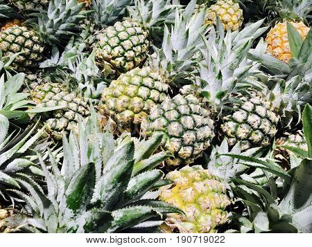 Delicious Fresh Yellow Pineapples One of A Famous Tropical Fruit in The World.