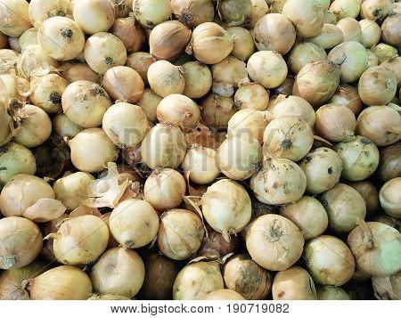 Fresh Fruits Pile of Ripe and Sweet Longkong Langsat Duku or Lanzones Fruits in Supermarket or Grocery Shop.