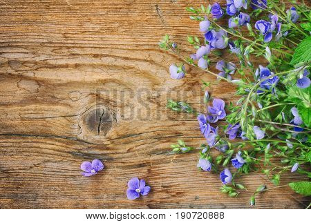Small delicate blue flowers of veronica persian on wooden table rustic style