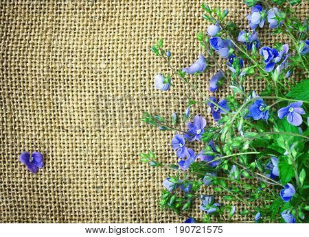Small delicate blue flowers veronica persian border on canvas fabric rustic style