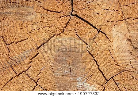Photo texture of a cut of a natural pine tree close-up