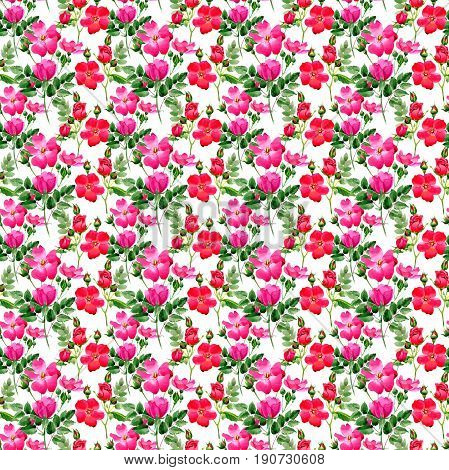 Wildflower rose flower pattern in a watercolor style isolated. Full name of the plant: rosa arkansana. Aquarelle wild flower for background, texture, wrapper pattern, frame or border.