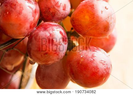 Bunch of ripe fresh red or pink juicy grapes with water drops in wire basket hanging over the edge sunlight macro summer fall harvest