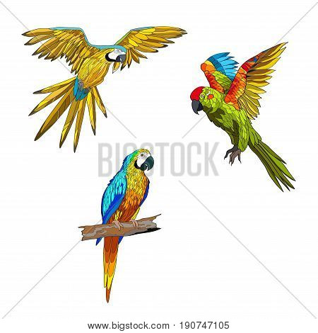 Vector illustration. Set of parrots flying parrots with yellow red and turquoise wings. Parrot sitting on a branch. Color image.