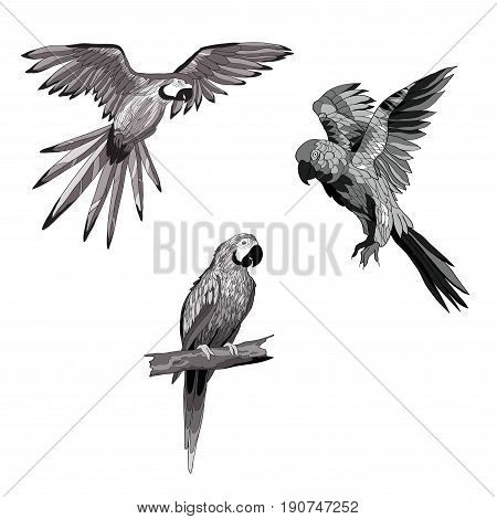 Vector illustration. Set of parrots flying parrots. Parrot sitting on a branch. Black and white and gray image.