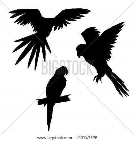 Vector illustration. Set of parrots flying parrots. Parrot sitting on a branch. Black silhouette.