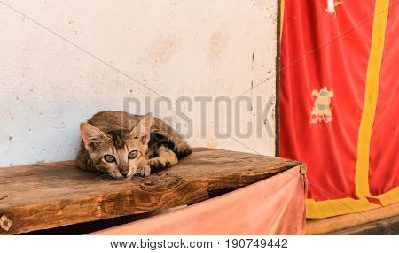 Little Bhutanese Stray Cat With Green Eyes Lying On A Wooden Bench In A Village In Bhutan.