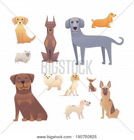 Group of purebred dogs. Illustration for dog training courses, breed club landing page and corporate site design.
