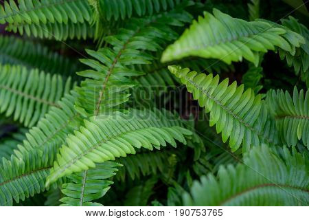 Green fern leaf in the forest background