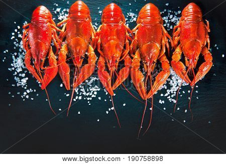 Crawfish closeup. Red boiled crayfish with herbs on stone slate dark background. Lobster closeup. Border design with copy space for your text