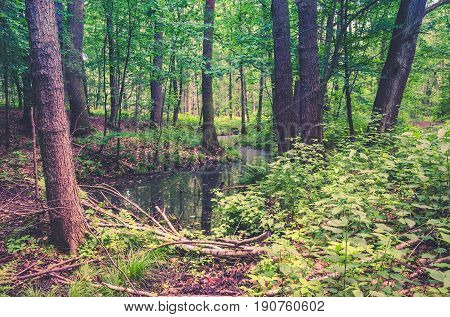 Spring forest landscape. Trees bushes and swamps in the forest.