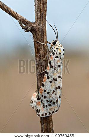 A closeup of a beautiful moth in the field
