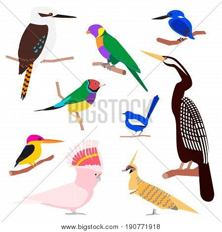 Vector set of exotic birds: wren, finch, cockatoo, parrots, darter. Kookaburra