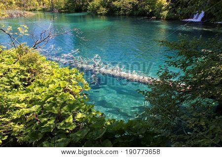 Plitivice lake, lake between trees, trees in lake water