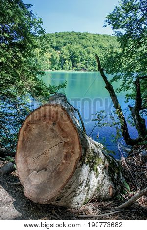 Plitvice lake in summer, lake and trees, lake and trunk