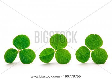 Green clover leaves isolated on the white background, clipping path included.