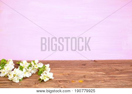 Blossom Spring Flowers Of Apple On A Pink Wooden Background