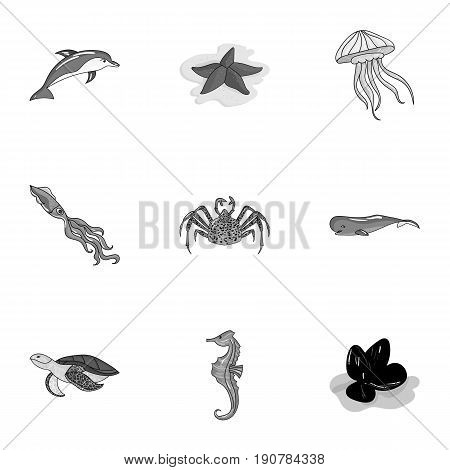 Marine and river inhabitants. Fish, whales, octopuses.Sea animals icon in set collection on monochrome  vector symbol stock  illustration.