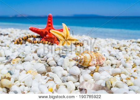 Shell and star fish on white pebbles by the sea