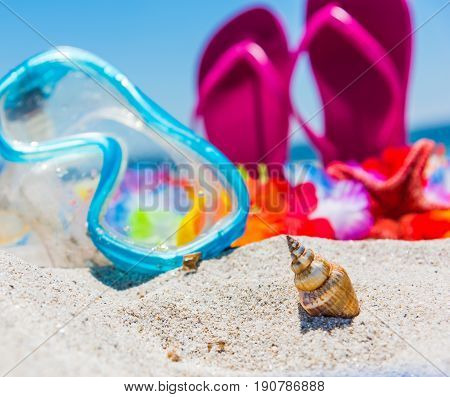 Shell stuck in the sand with diving mask and sandals on the background