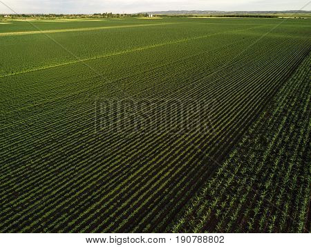 Cultivated field from drone point of view countryside landscape aerial view